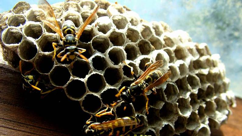 soñar con abejas y avispas