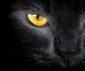 El significado de soñar con Gatos