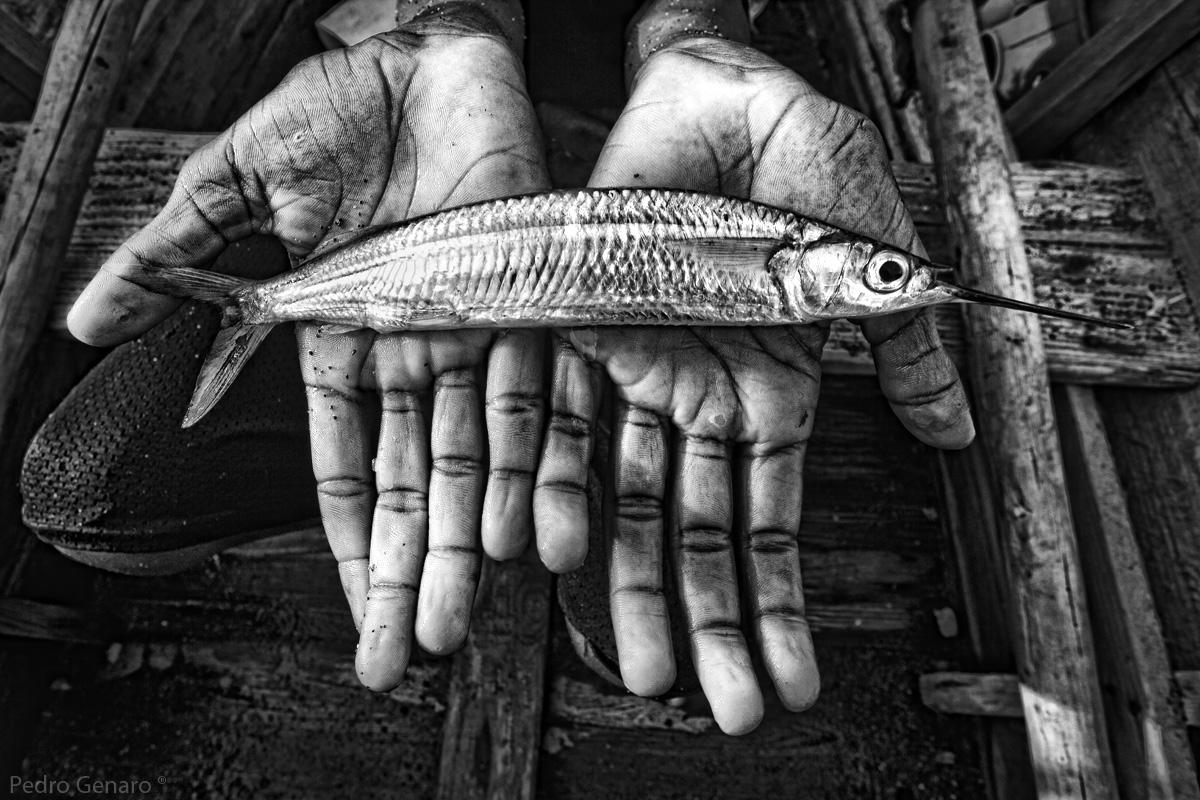 sonar-con-peces