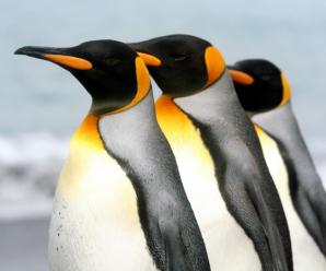 Soñar con pingüinos: Tienes una forma particular de ser