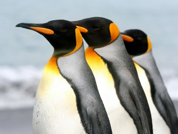 sonar-con-pinguinos