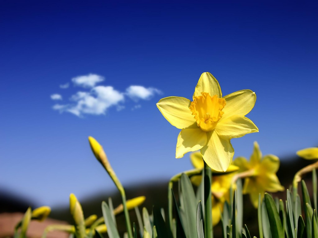sonar-con-flores-amarillas