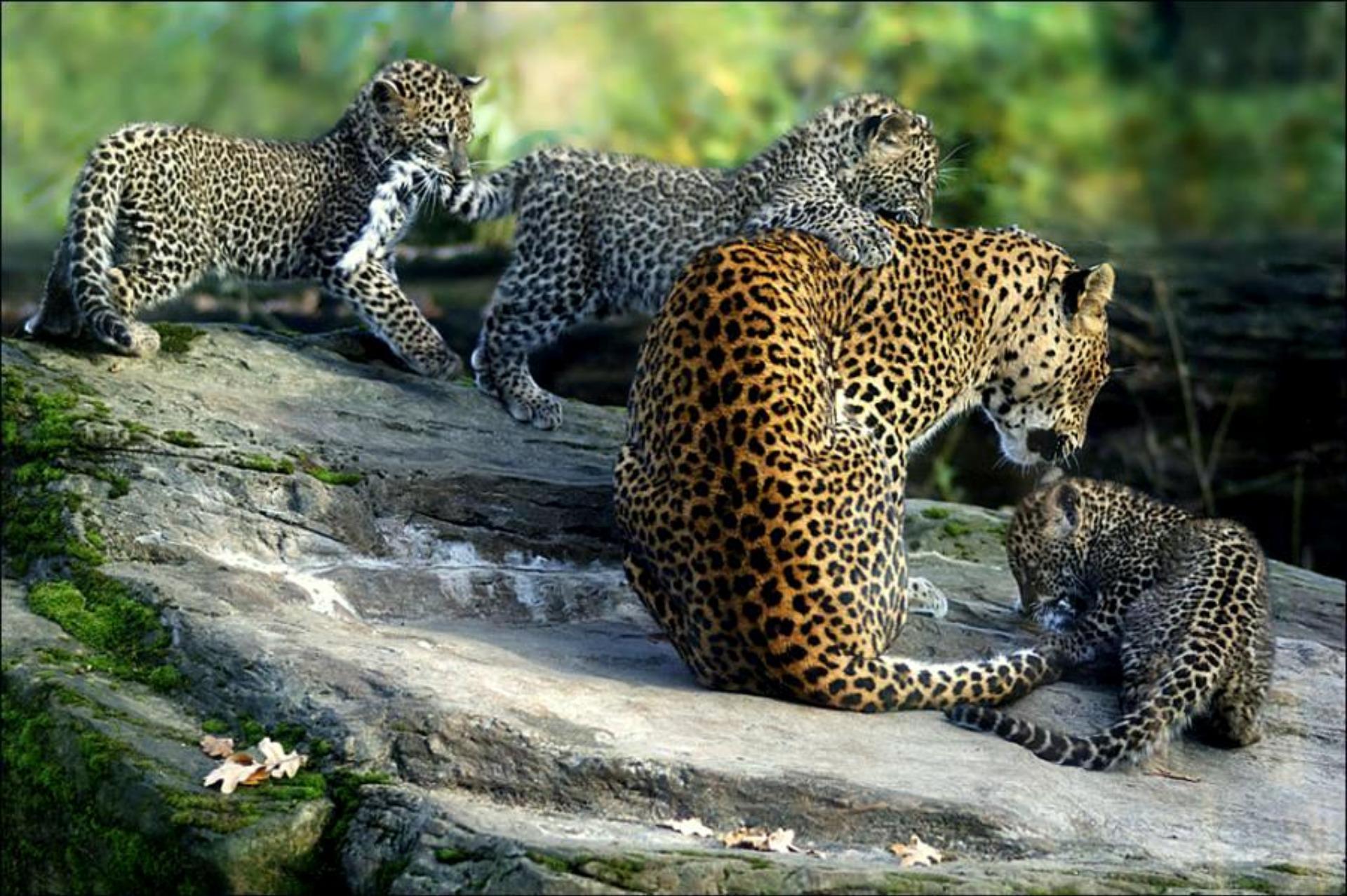 sonar-con-animales-de-la-selva