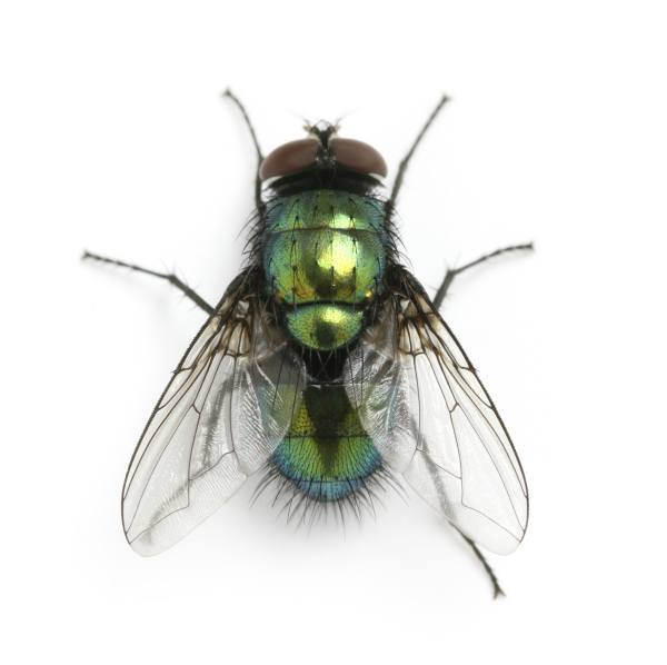 sonar-con-moscas
