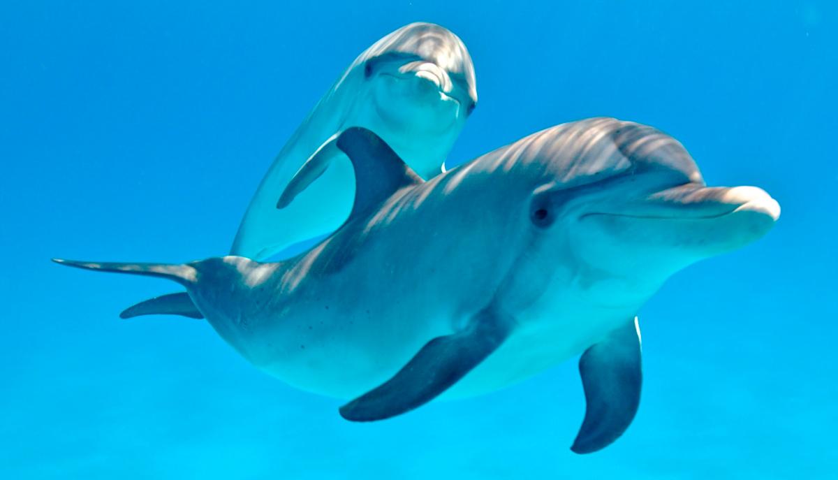 sonar-con-delfines