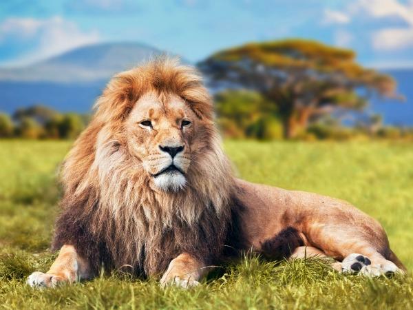 Soñar con un León