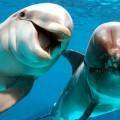Significado de sueños con Delfines