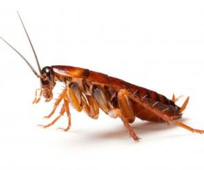 Soñar con Cucarachas: Malas intenciones hacia ti