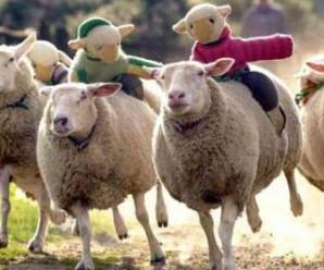 Soñar con ovejas o borregos: Exito y bienestar económico