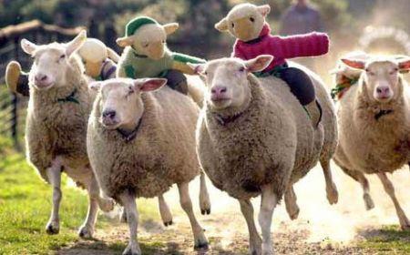 Soñar con ovejas o borregos éxito y bienestar económico