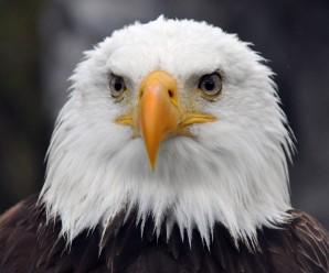Soñar con Aguilas