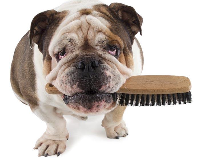 So ar con perros que significa - Cuando se puede banar a un perro ...