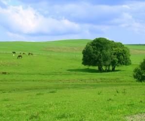Soñar con campos abiertos