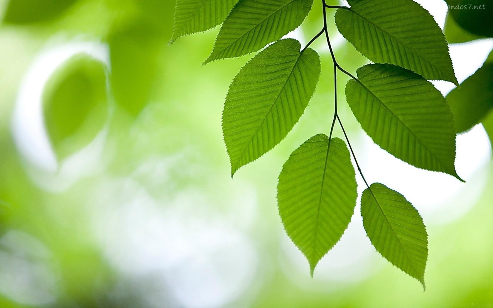 Soñar con hojas