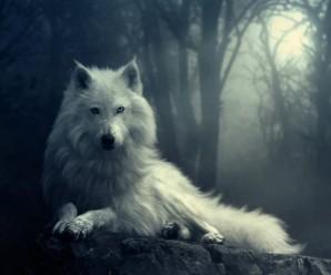 Soñar con Lobos