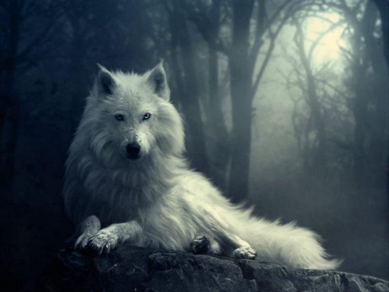 Soñar con lobos1