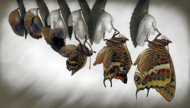 Soñar con Metamorfosis
